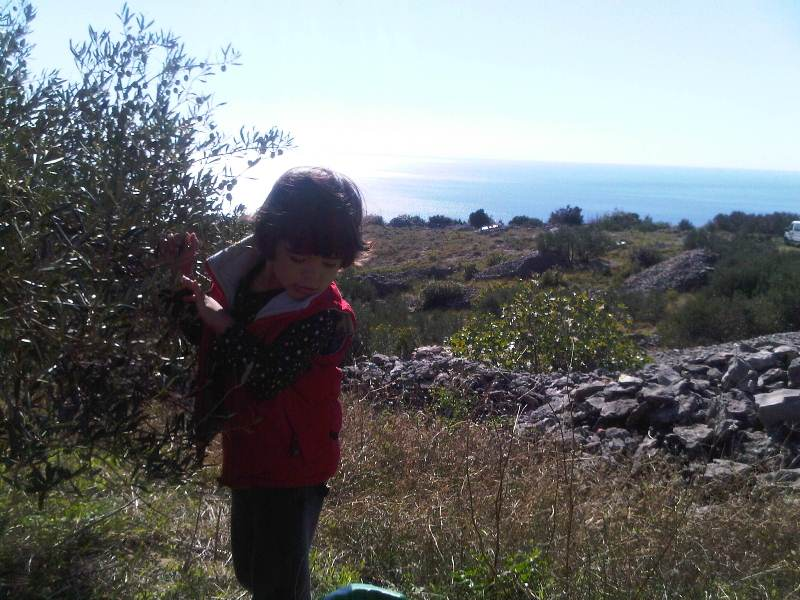 My daughter Amalija first olive picking